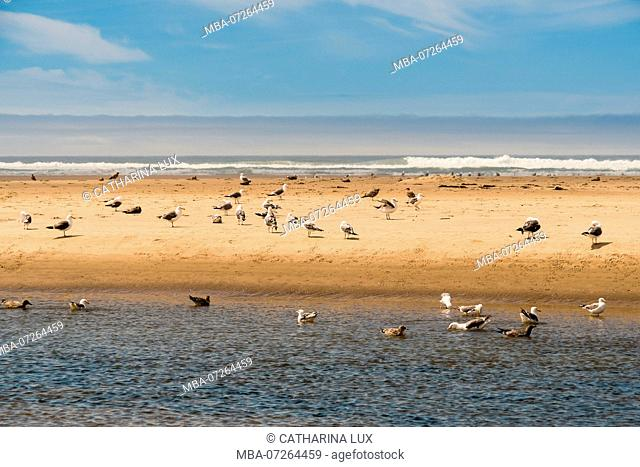 Pacific Coast, Cannon Beach, Seagulls