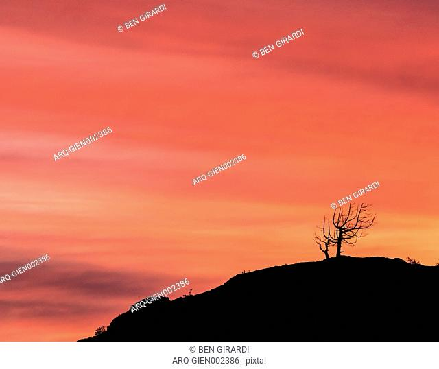 A Dead Leafless Tree Sits On A Ridgeline As The Sky Glows Red At Sunrise In Bariloche\, Argentina