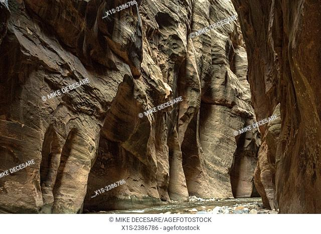 A slot canyon along the Virgin River in Zion National Park