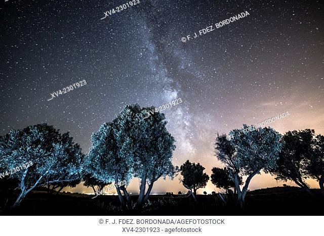 Almond tree with milky way background in Monegros, Aragón, Spain