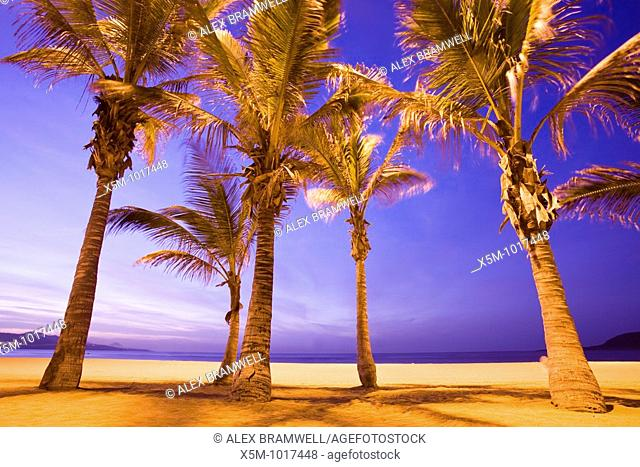 Palm trees illuminated by sodoim lights in the hour after sunset on Las Palmas' Canteras Beach on Gran Canaria