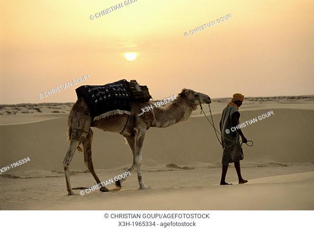 camel driver and dromadary in Lareguett dunes around Nefta, Tunisia, North Africa