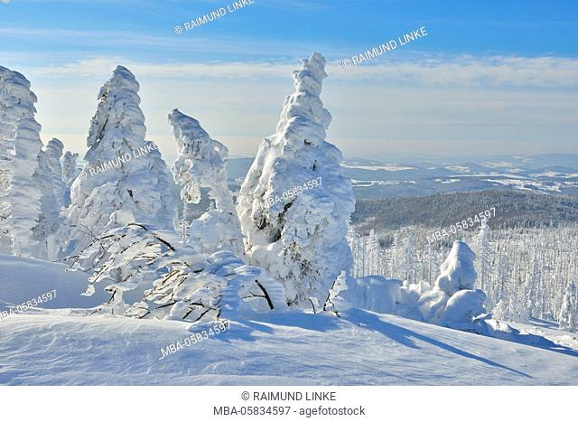 Snow Covered Conifer Trees in the Winter, Grafenau, Lusen, National Park Bavarian Forest, Bavaria, Germany