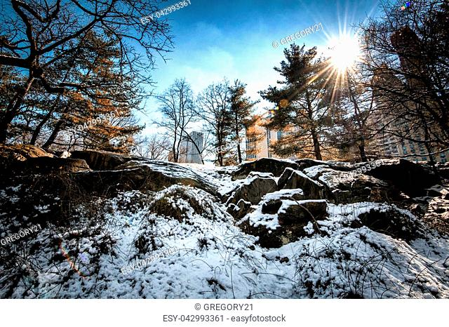 Image of Central Park, NYC in the winter