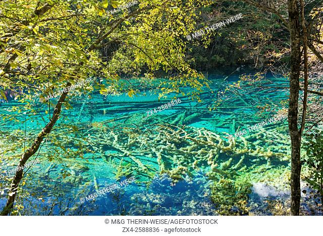 Colorful Lake, Jiuzhaigou National Park, Sichuan Province, China, Unesco World Heritage Site