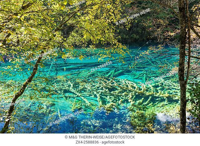 Colorful Lake, Jiuzhaigou National Park, Sichuan Province, China, Unesco World Heritage Site