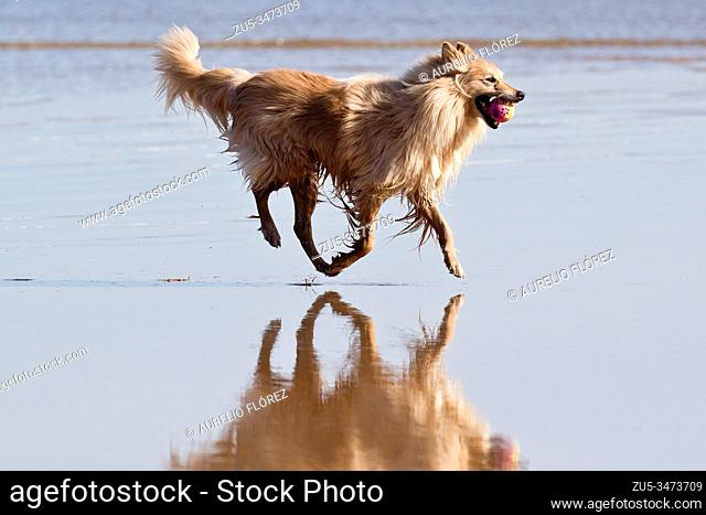 The dog (Canis lupus familiaris), called domestic dog or can, and colloquially pooch or tuso, and also choco, is a carnivorous mammal of the family of canids