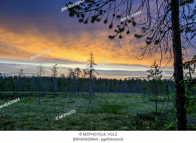 moorland in the Finnish taiga before sunrise, Finland, Taigawald