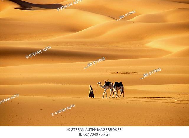 Tuareg walks with camels through the desert Mandara Libya