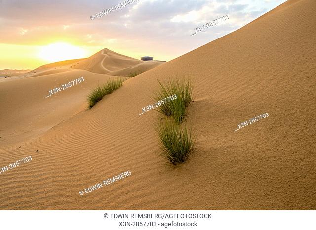 United Arab Emirates - Small grass plants grow in the southern desert of Al Ain, just outside of Abu Dhabi
