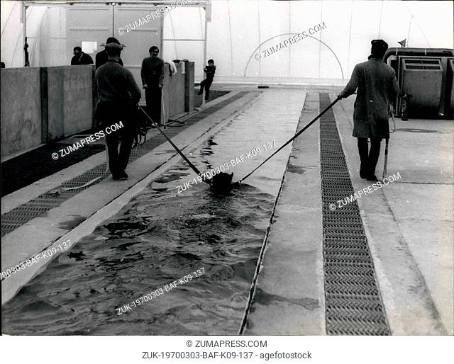 Mar. 03, 1970 - Swimming Pool for French Horses- Unique in Europe: David Wildenstein, 52, is not only an internationally Known art Cealer running one of the...