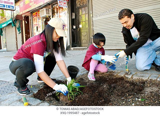 Hispanic community service volunteers of the Harlem Spanish Manhattan Seventh Day Adventist Church plant flowers in an East Harlem neighborhood public sidewalk