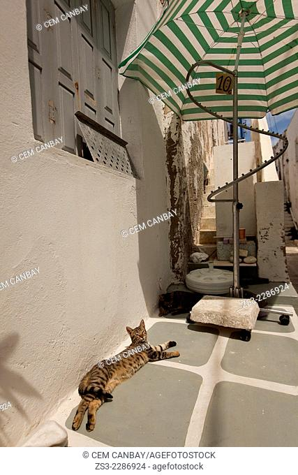 Cats in the alley of town, Naoussa, Paros, Cyclades Islands, Greek Islands, Greece, Europe