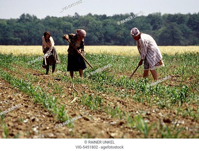 ROU , ROMANIA : Women working on the field near Ploiesti , June 1994 - Ploiesti, Prahova, Romania, 13/06/1994