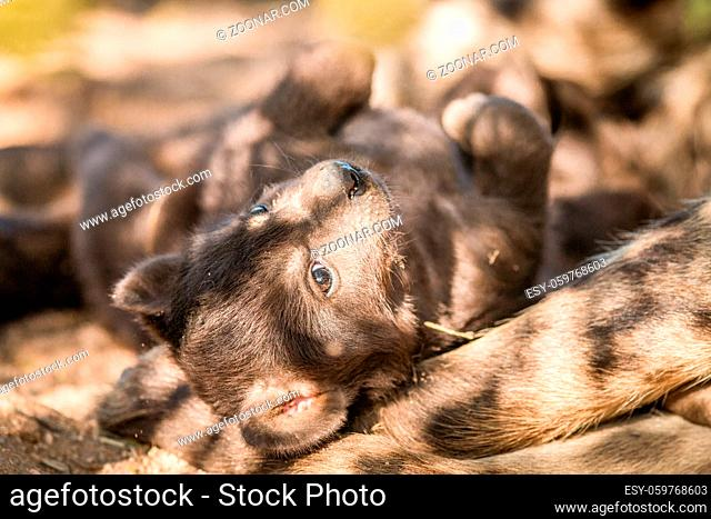 Spotted hyena pup in the Kruger National Park, South Africa