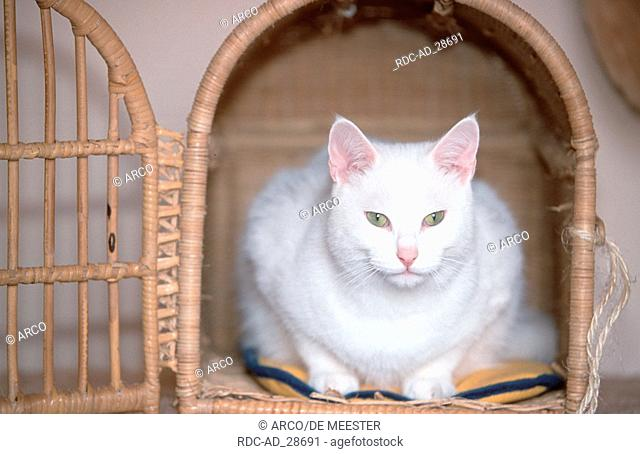 Domestic Cat in transport kennel