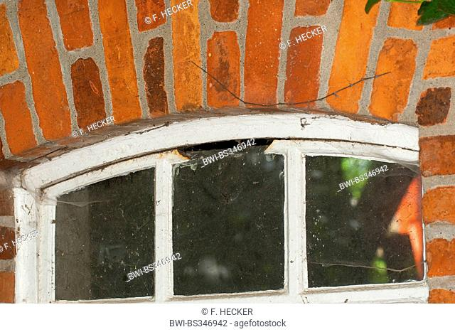 in a window sawed out gap as an opening to the inside of a shed, hollow cavities as a hiding place, Germany