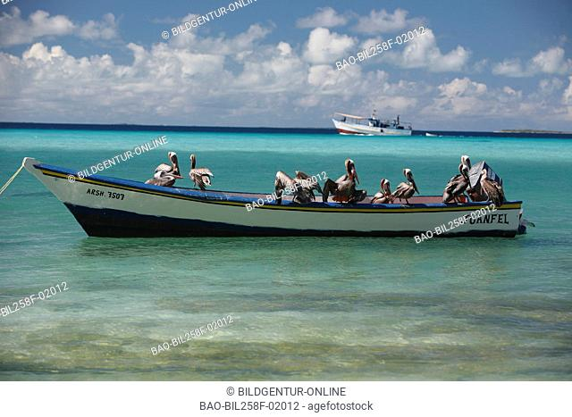 Pelicans rest on a fishing boat in the island scenery of the village island grain Roque of the island group Lot Roques in the Caribbean before Venezuela in...