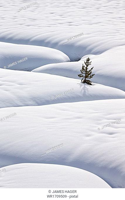 Lone evergreen tree in the snow with a meandering stream, Grand Teton National Park, Wyoming, United States of America, North America