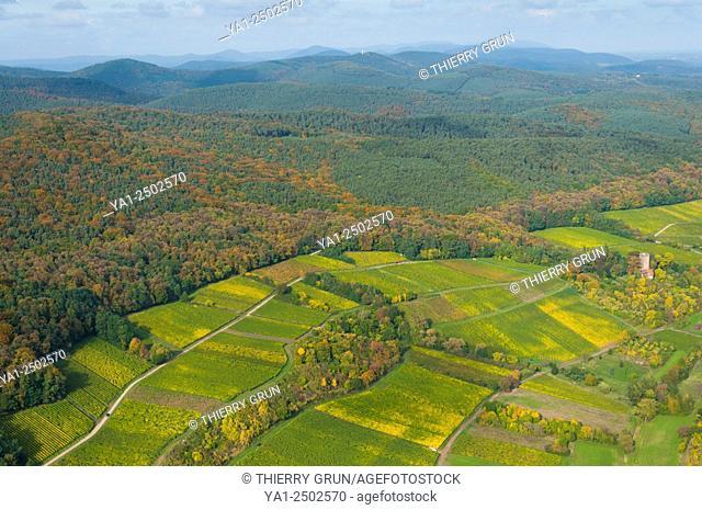 Germany, Rhineland-Palatinate, Schweigen-Rechtenbach vineyards in autumn aerial view