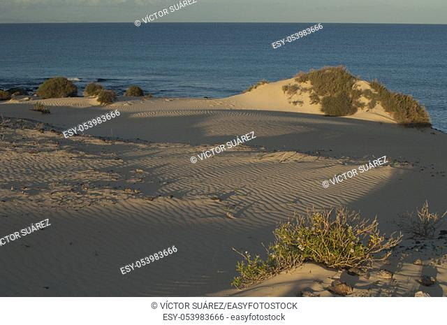 Corralejo dunes. La Oliva. Fuerteventura. Canary Islands. Spain