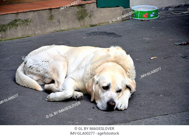Dog laying in street