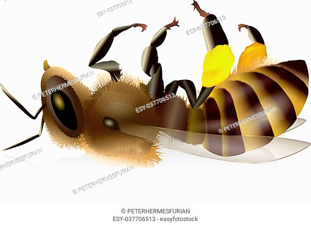Illustration of an isolated dead honey bee with pollen baskets. Vector on white background