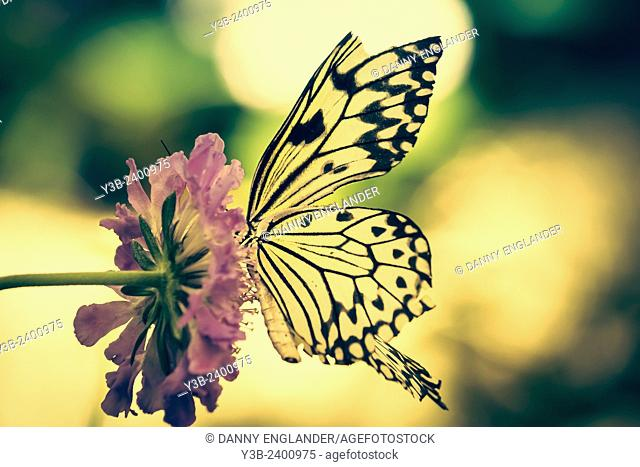 Paper Kite butterfly on a pink flower vintage-look