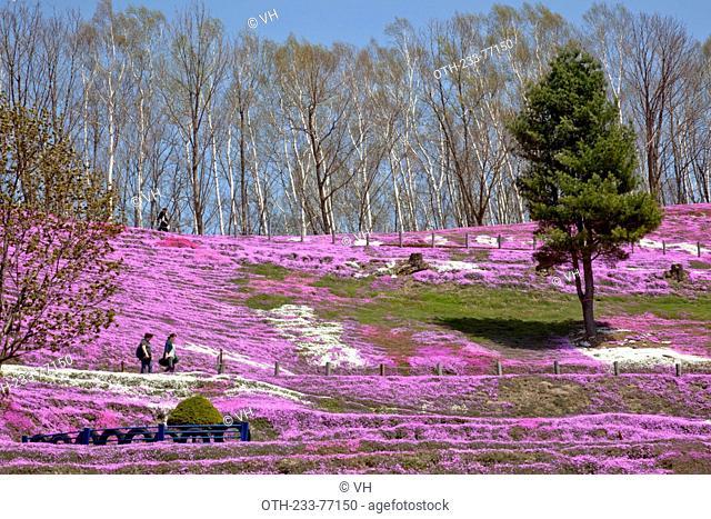 Higashimokoto Shibazakura Park, Ozora-cho, Abashiri-gun, Hokkaido, Japan