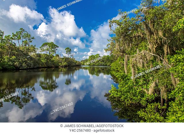 South Creek in Oscar Scherer State Park in Nokomis Florida