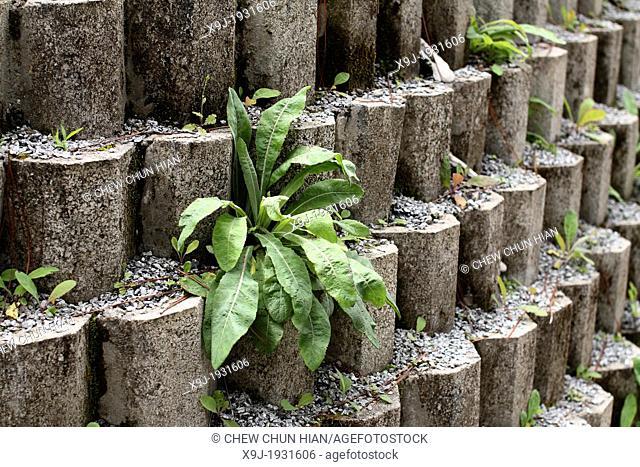 Close up texture of grey concrete Brick