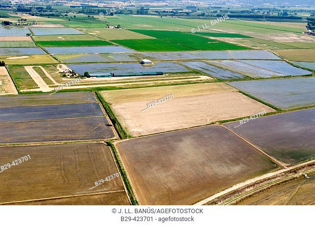 Pals ricefields. Girona. Catalunya. Spain