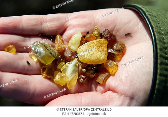 A Tourist holds up pieces of amber during sunny weather at the Baltic Sea beach of Vitte, on the island of Hiddensee, Germany, 20 March 2014