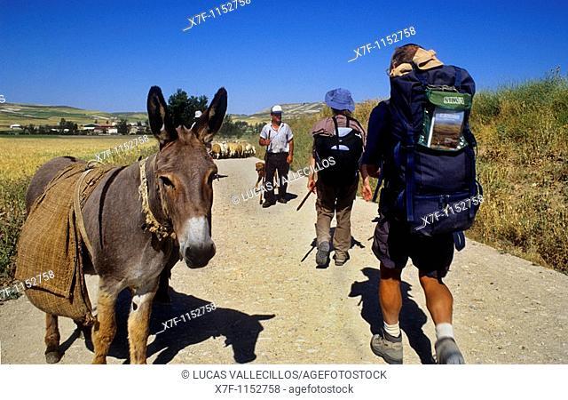 Pilgrims and Shepherd near Hornillos del Camino  Burgos province  Spain  Camino de Santiago