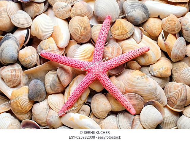 sea shells background red sea star