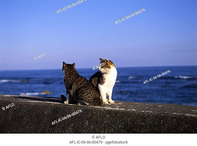 Two cats on a sea dyke