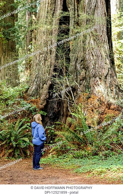 A female hiker looks up to the tall Redwood trees in Lady Bird Johnson Grove, Redwood National and State Parks; Orick, California, United States of America
