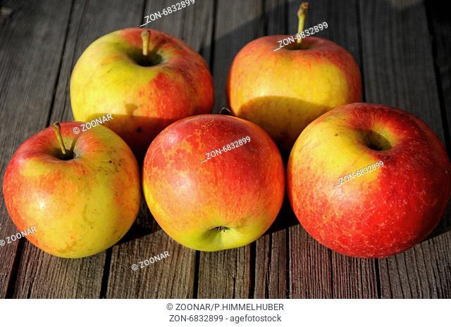 Malus domestica Antares, Syn. Dalinbel, Apfel, Apple