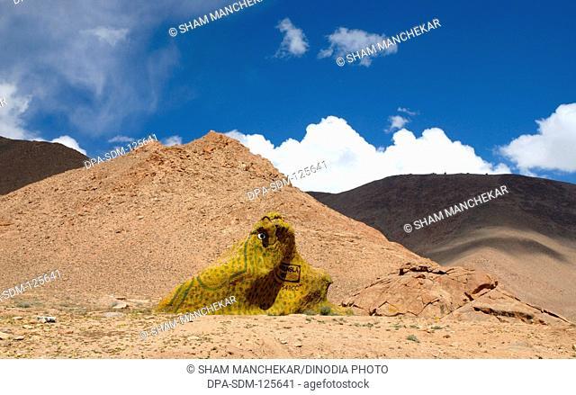 Rock painted by military as frog at Khardungla ; Ladakh ; Jammu & Kashmir ; India