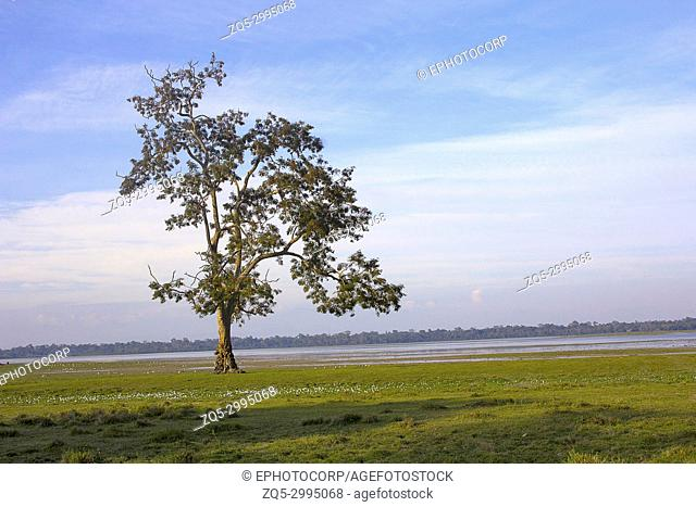 Tree at Kaziranga National Park, Assam, India
