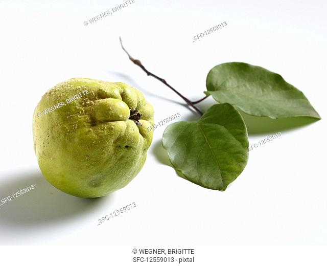 A quince and two leaves
