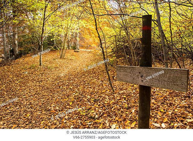 Forest Betato