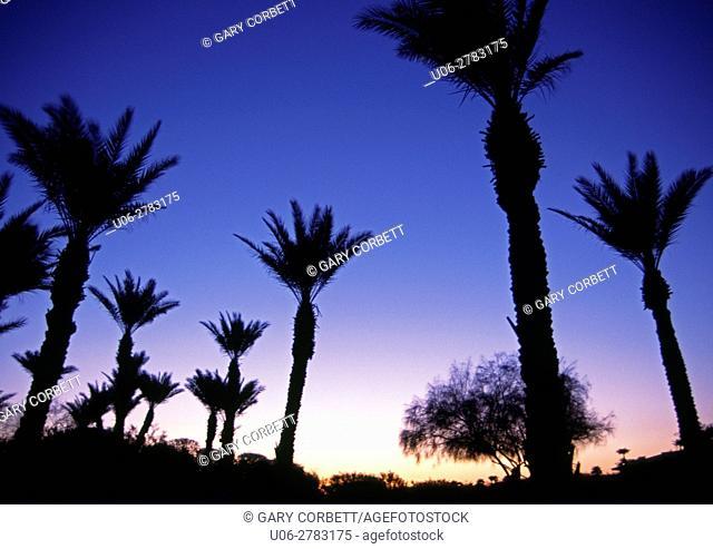 Twilight at Palm Springs California