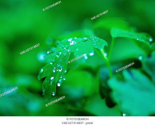 grass, plants, plant, waterdrop, film