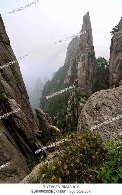 trees growing on rocks in Huangshan Mountains at Anhui province of China
