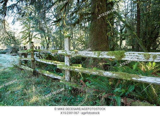 Moss covers parts of a split rail wooden fence in Western Washington