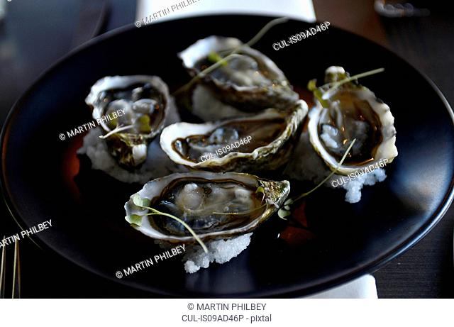 Still life gourmet food, plate of oysters