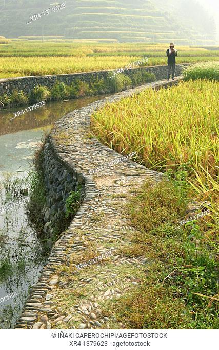 Rice terraces and people, Zhaoxing, Guizhou, China