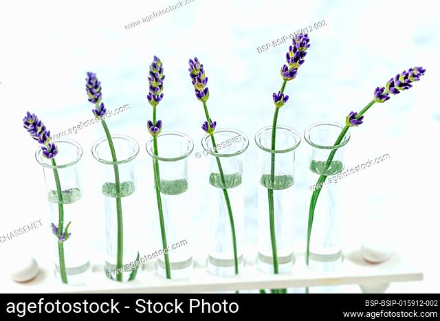 Scientific experiment on flowers lavender in test tubes