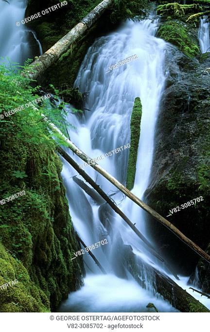 Little Zigzag Falls, Mt Hood National Forest, Oregon